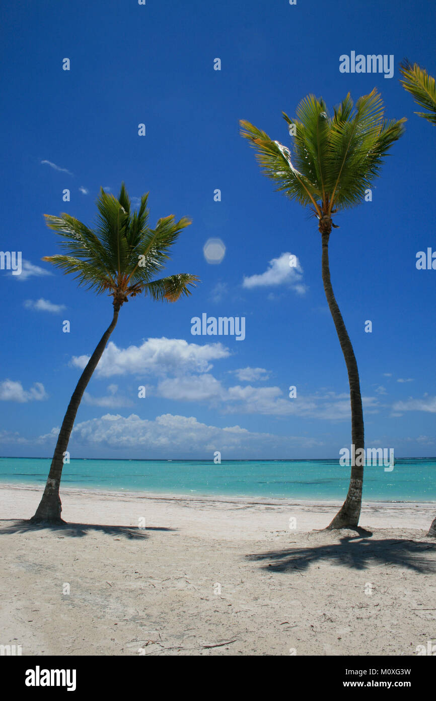 two palm trees on beach in punta cana cap cana stock photo