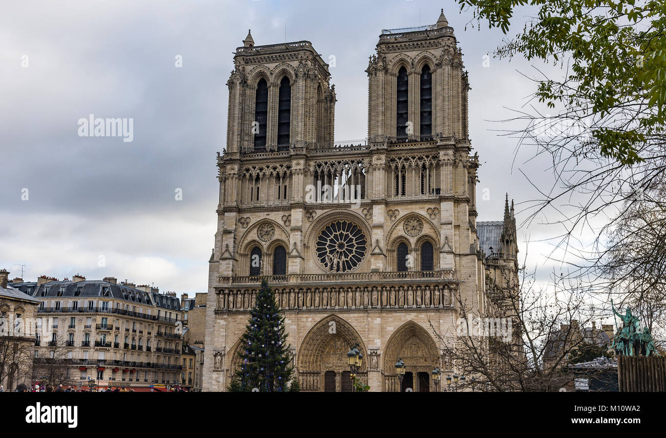 Large Christmas tree in front of the Notre-Dame de Paris Notre Dame ...