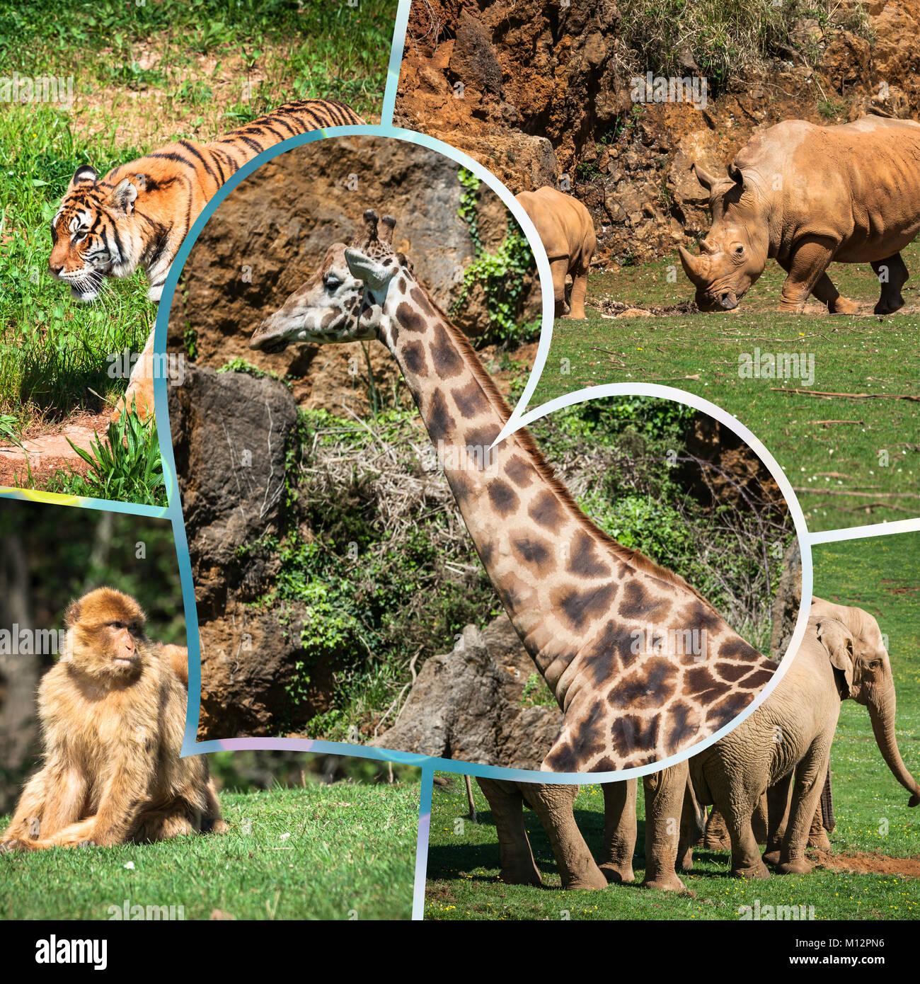 Wild african animals 61