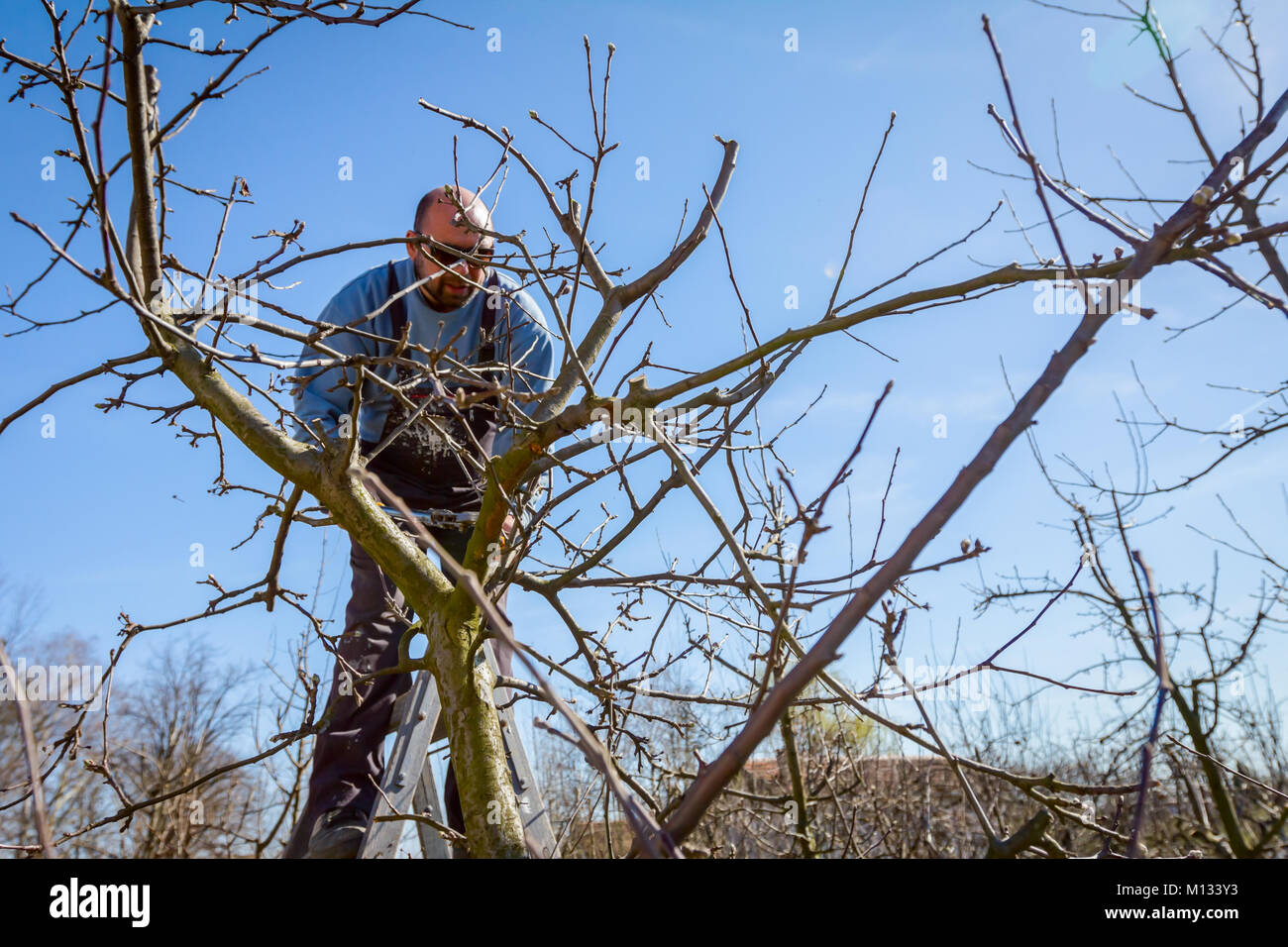 Branches Cut Fruit Tree Stock Photos Amp Branches Cut Fruit