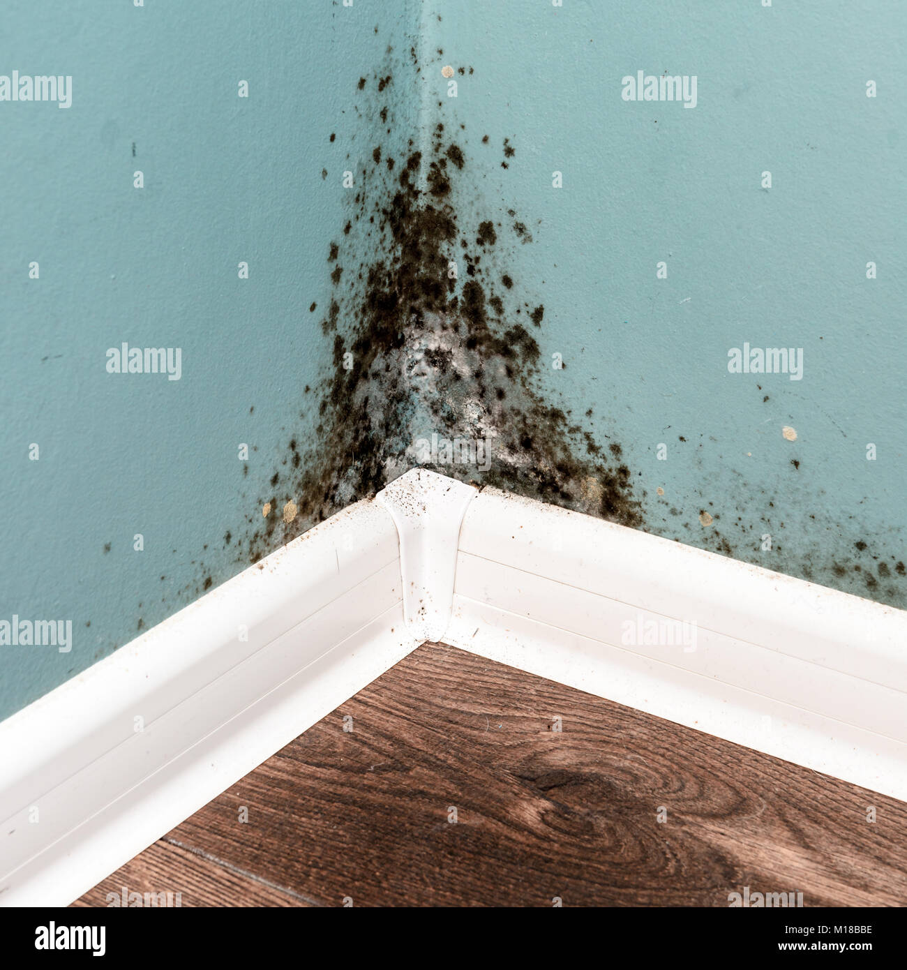 Mold In A Rented Room