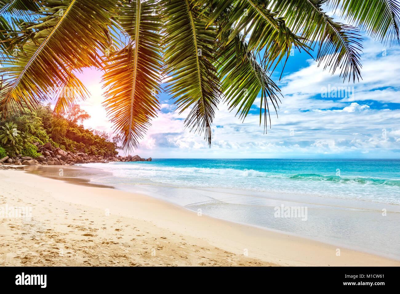 Tropical Island Beach Ocean Sunset: Palm Tree Over Beach Sunset Stock Photos & Palm Tree Over