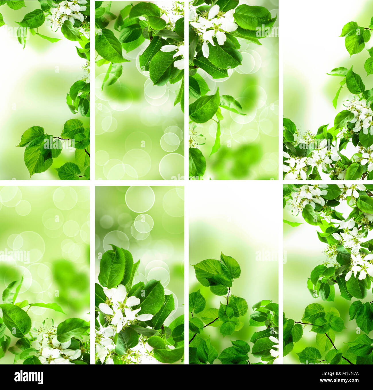 abstract green wallpaper background with spring foliage, bokeh stock