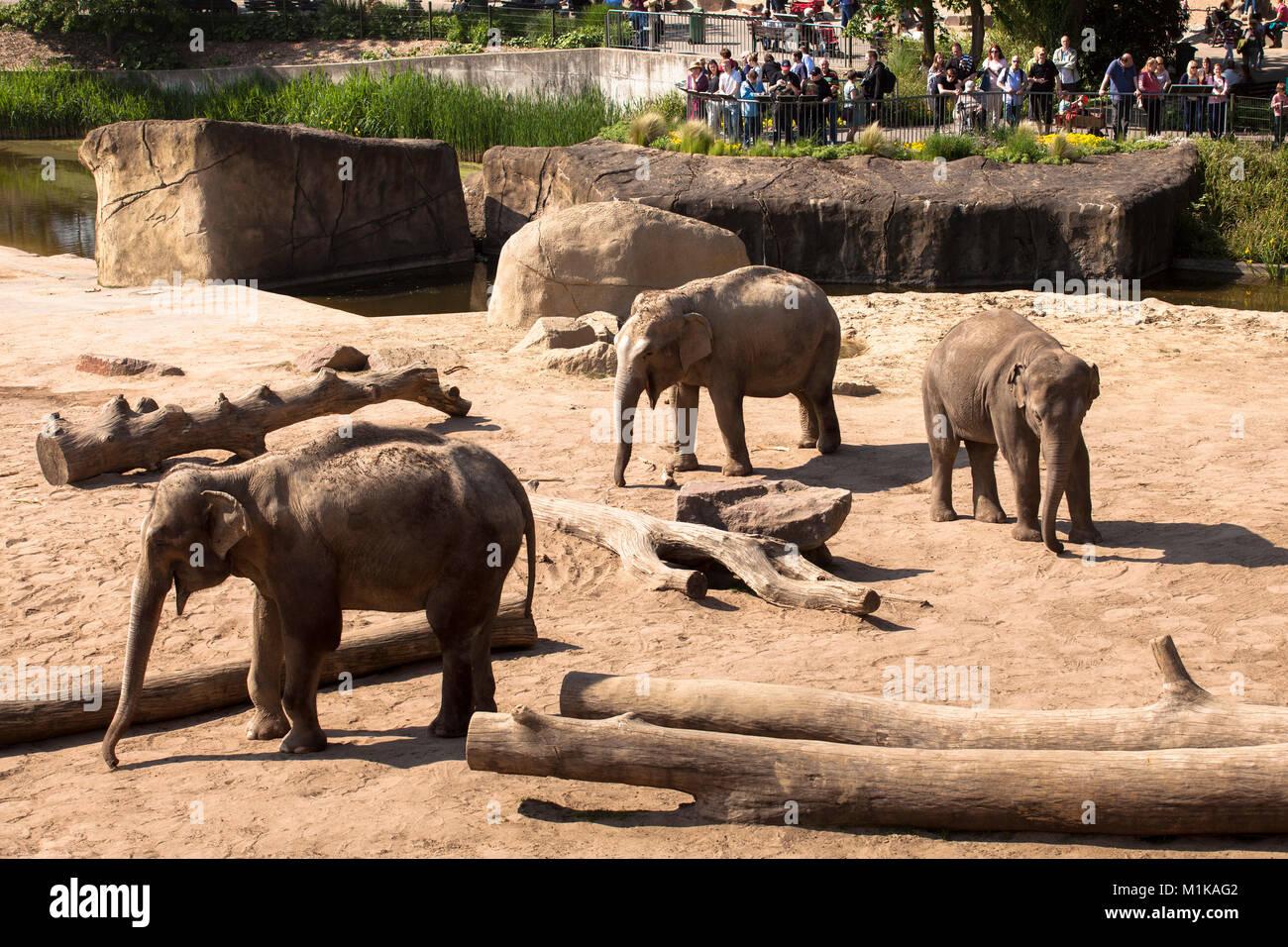 see elefanten stock photos see elefanten stock images. Black Bedroom Furniture Sets. Home Design Ideas