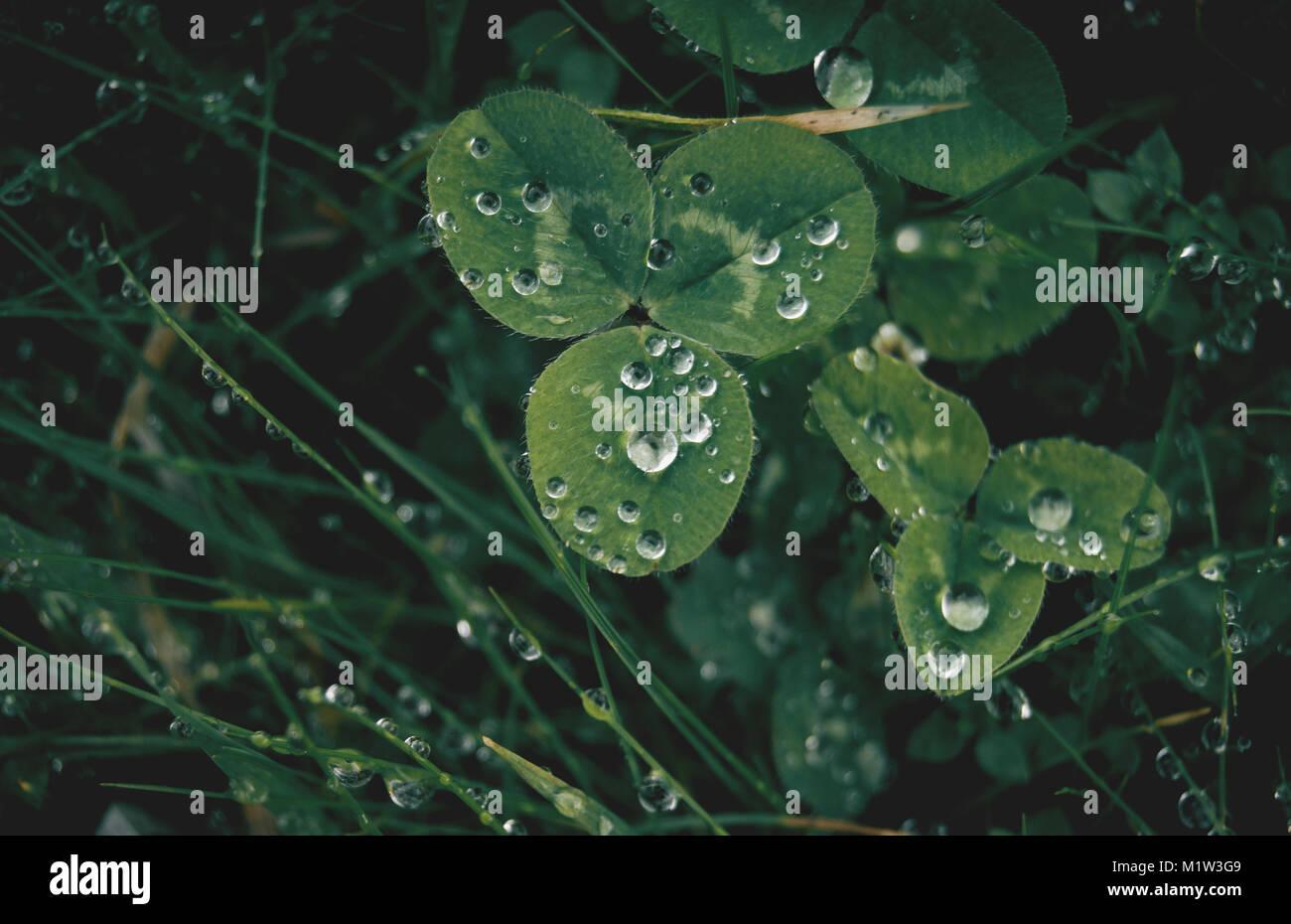 Clover leaf shape stock photos clover leaf shape stock - Agua de lluvia ...