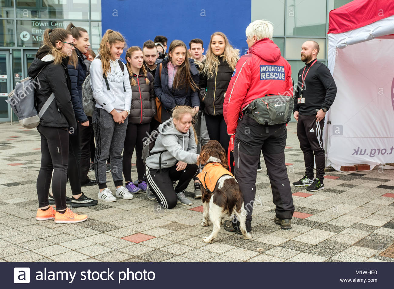 Mountain Rescue Dogs Scotland