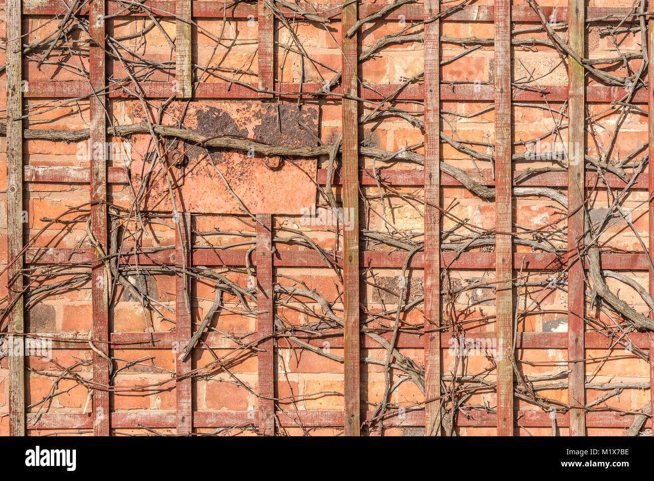 how to fix trellis to brick wall