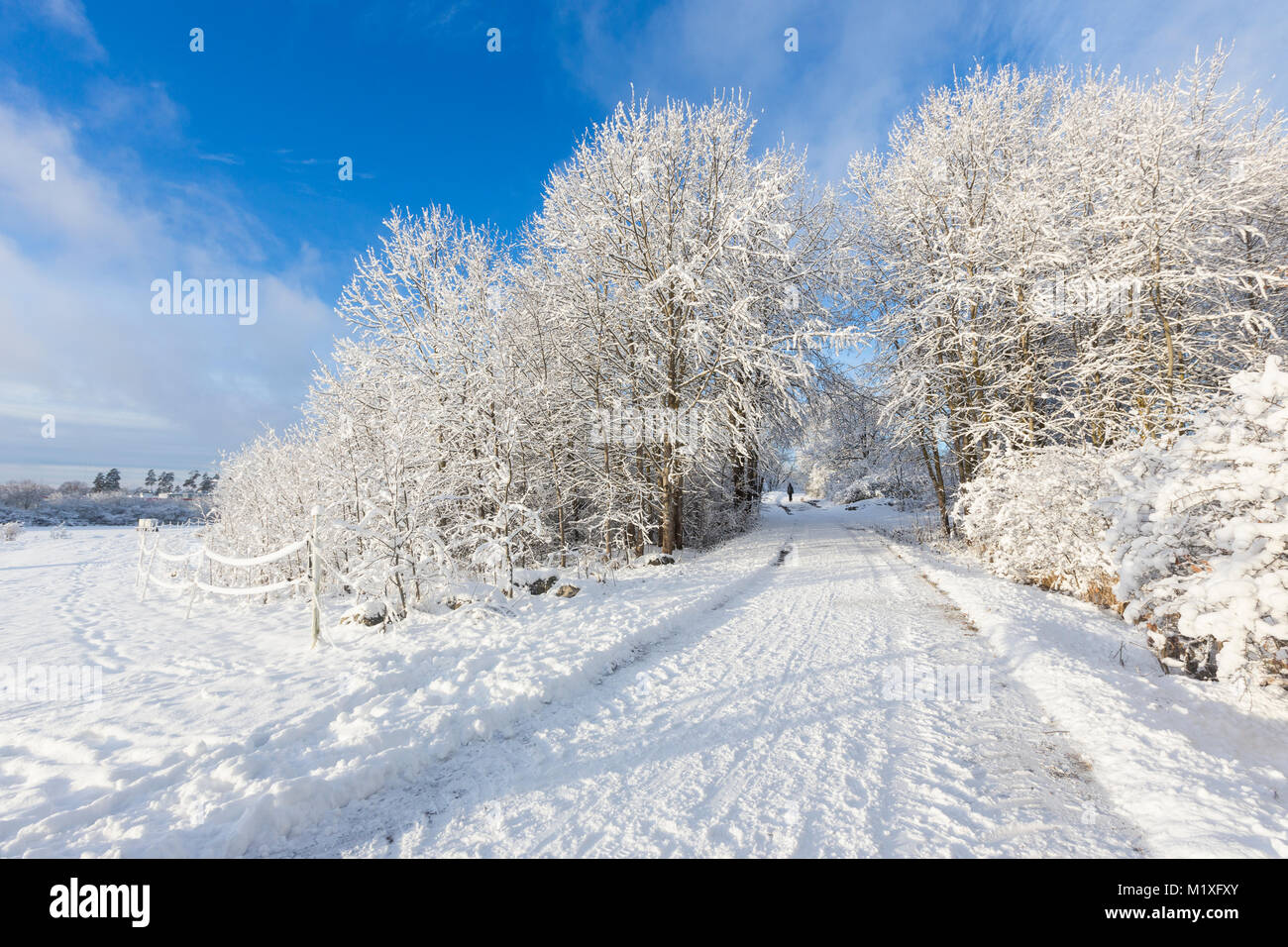 Rural Road Covered In Snow Jarfalla Sweden
