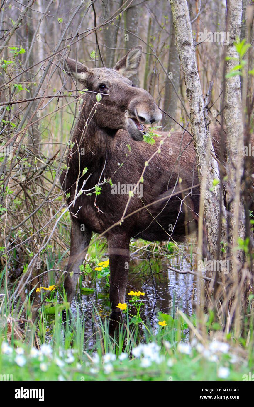 moose lake divorced singles personals Browse female personals and singles in saskatchewan free tracy meadow lake saskatchewan canada age: 22 nova moose jaw saskatchewan canada age: 21.