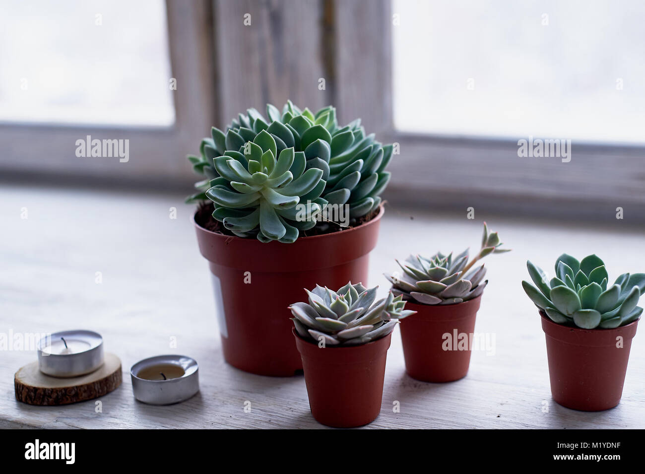 Succulents In A Minimalist Style House Plants For Interior Stock