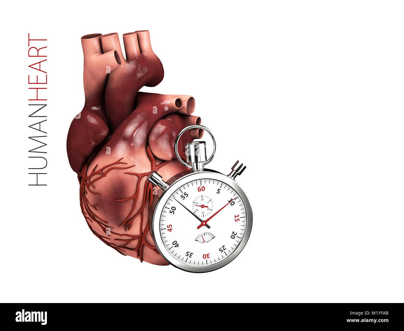Human heart anatomy with stopwatch. Organs symbol. 3d illustration ...