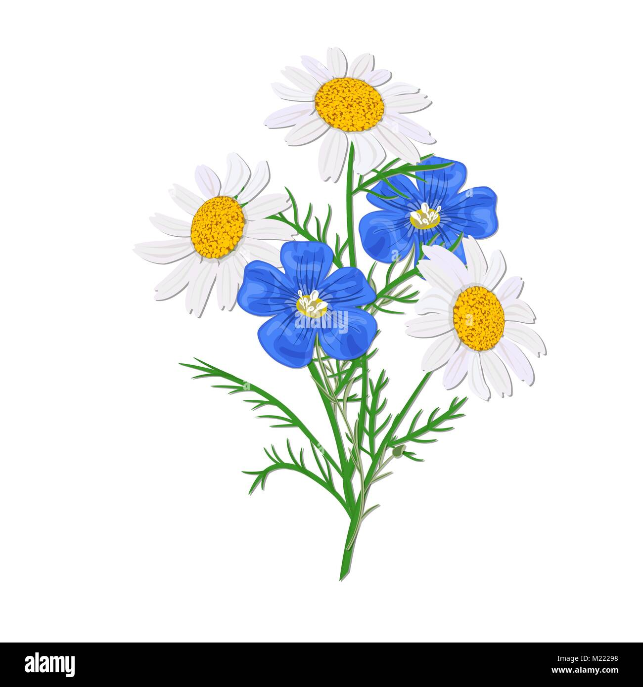 Daisy or chamomile Wildflower isolated with stem. Flax, forget-me ...