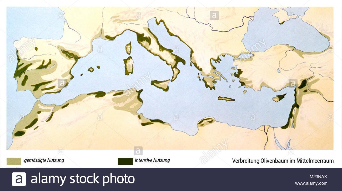 Map spread olive Mediterranean area Stock Photo: 173415618 - Alamy