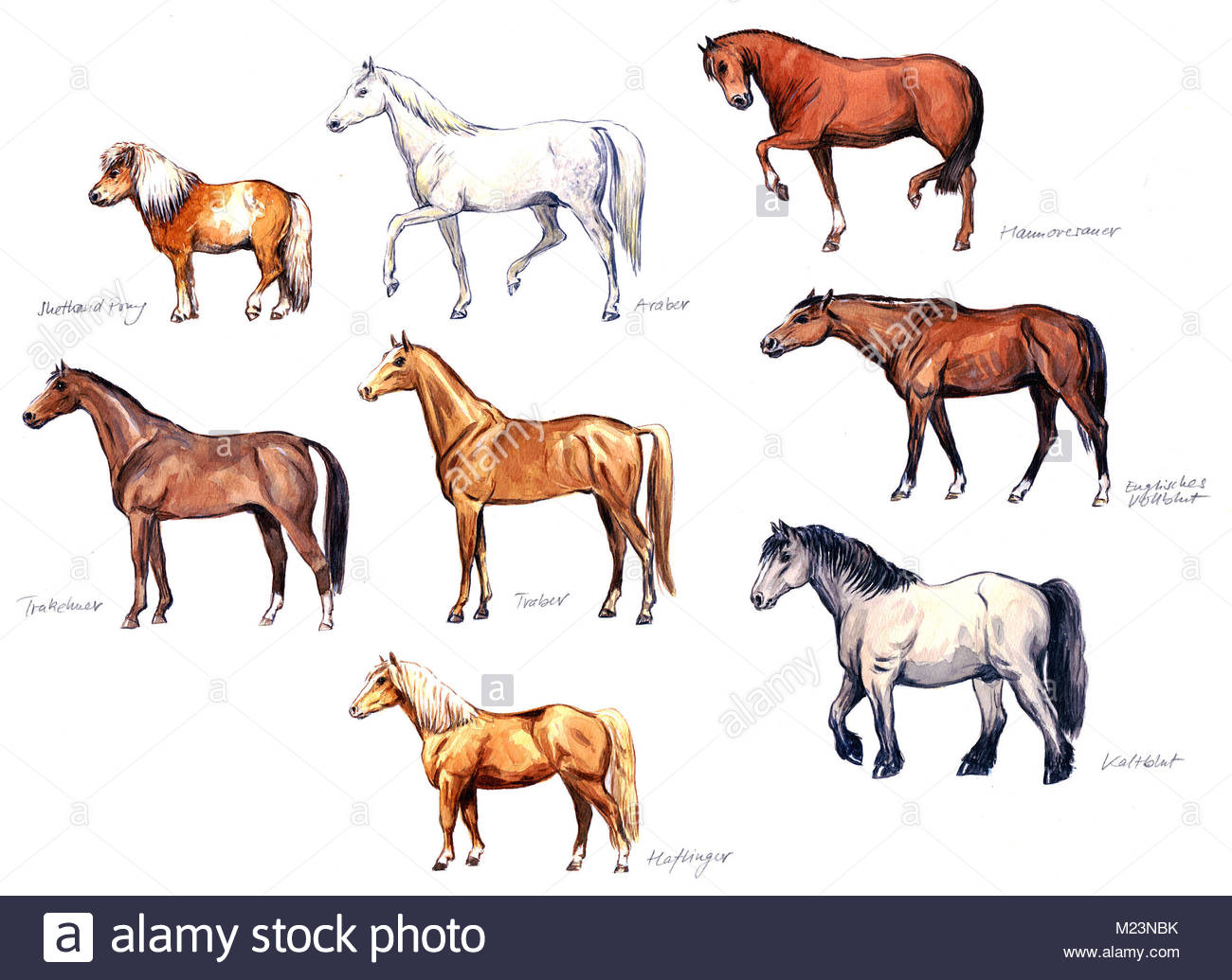 All Horse Breeds with Pictures Caballo Horsemarket]
