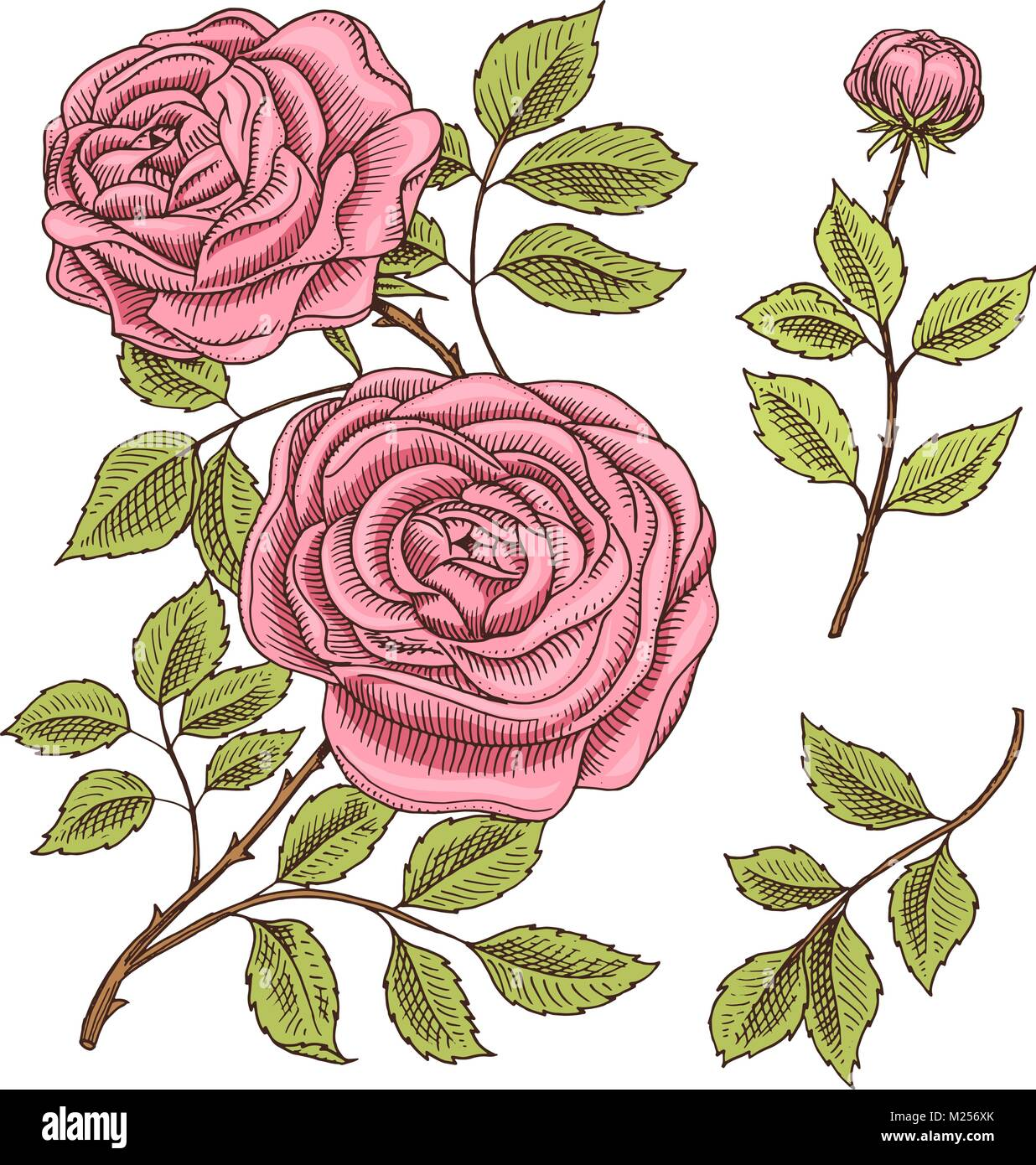 Roses with leaves and buds. Wedding botanical flowers in the garden ...