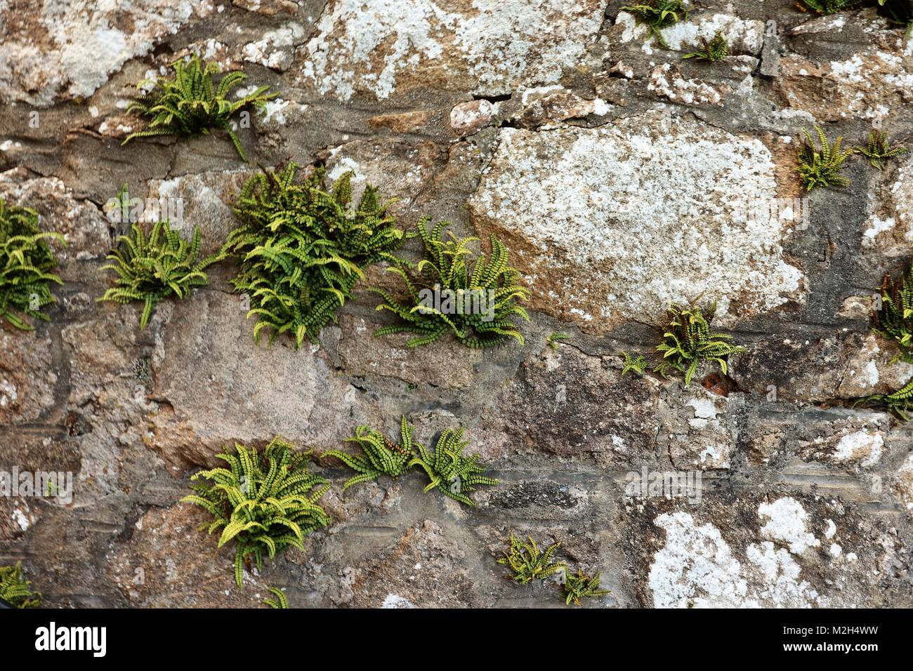 Clipped bushes stock photos clipped bushes stock images for Ornamental garden features