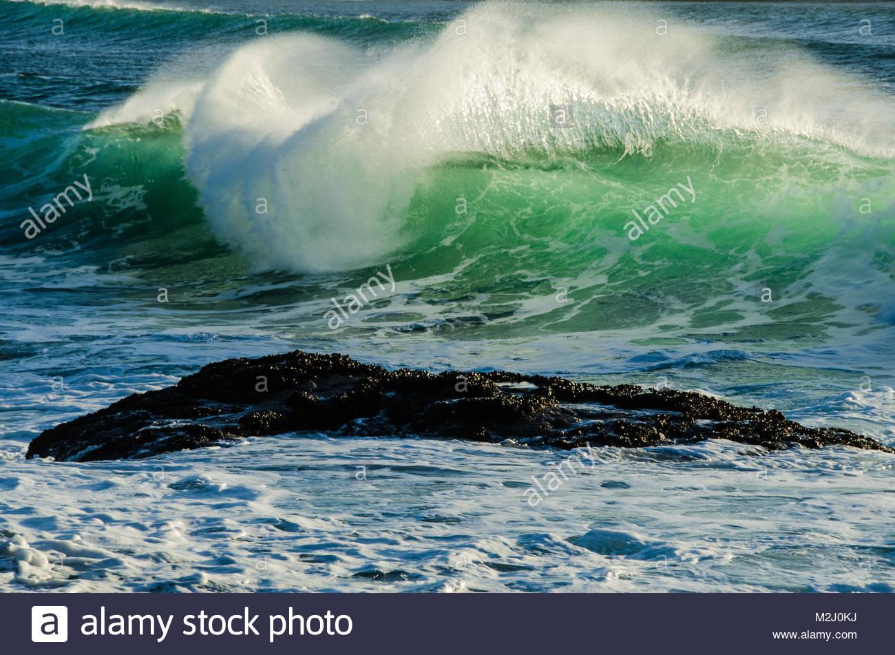 Cox bay near tofino stock photos cox bay near tofino stock a back lit emerald wave crashes in cox bay near tofino on vancouver islands nvjuhfo Image collections