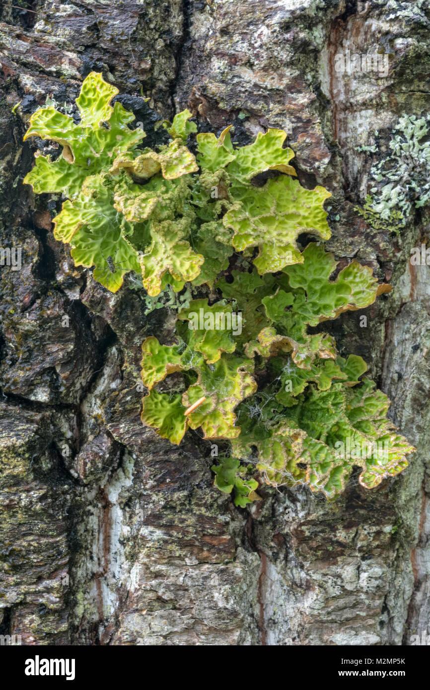 Homer alaska july 26 growing lichen spreads it yellow and green homer alaska july 26 growing lichen spreads it yellow and green folage across the grey bark of a tree mightylinksfo