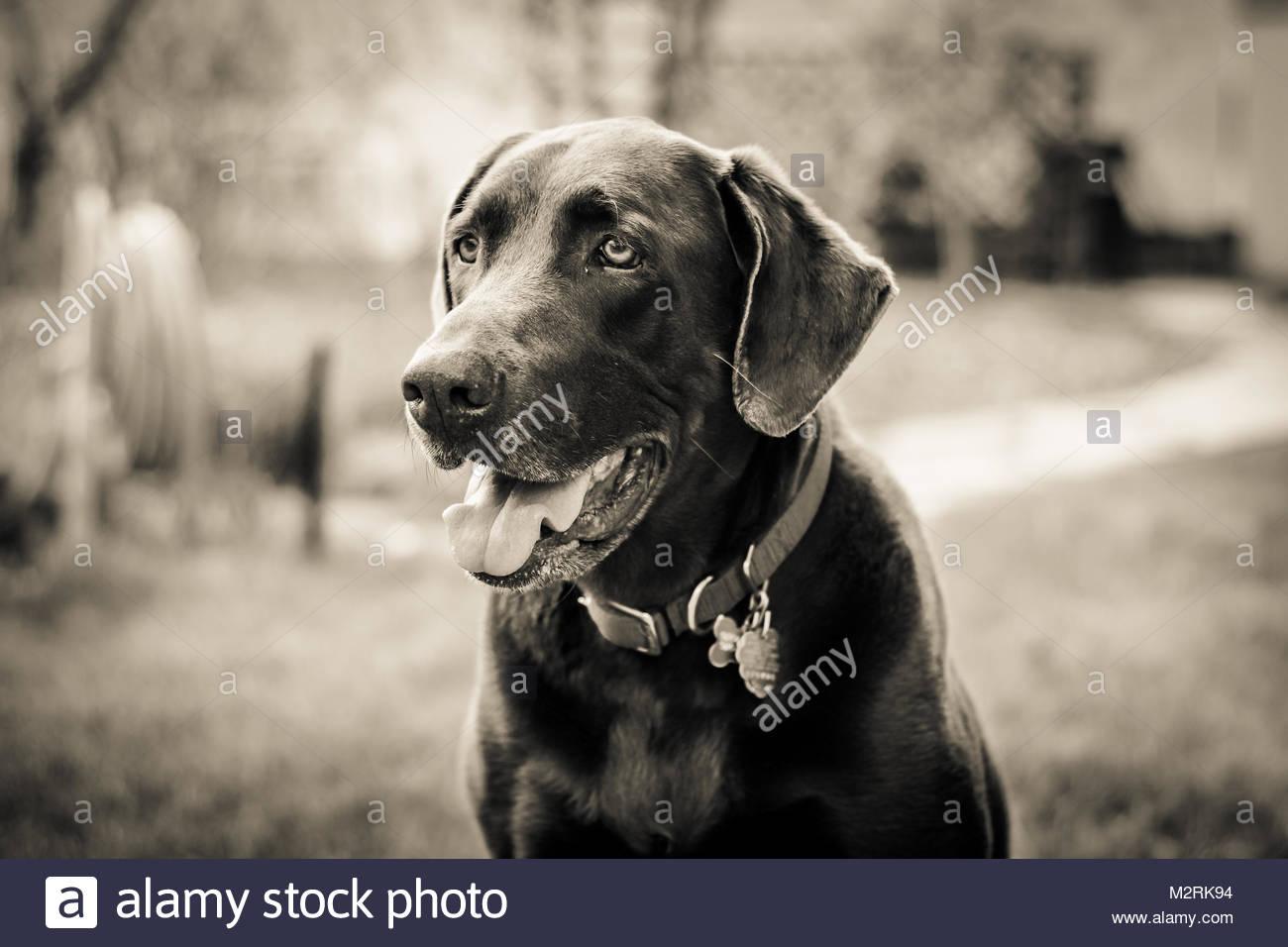 Dog Training Greeley