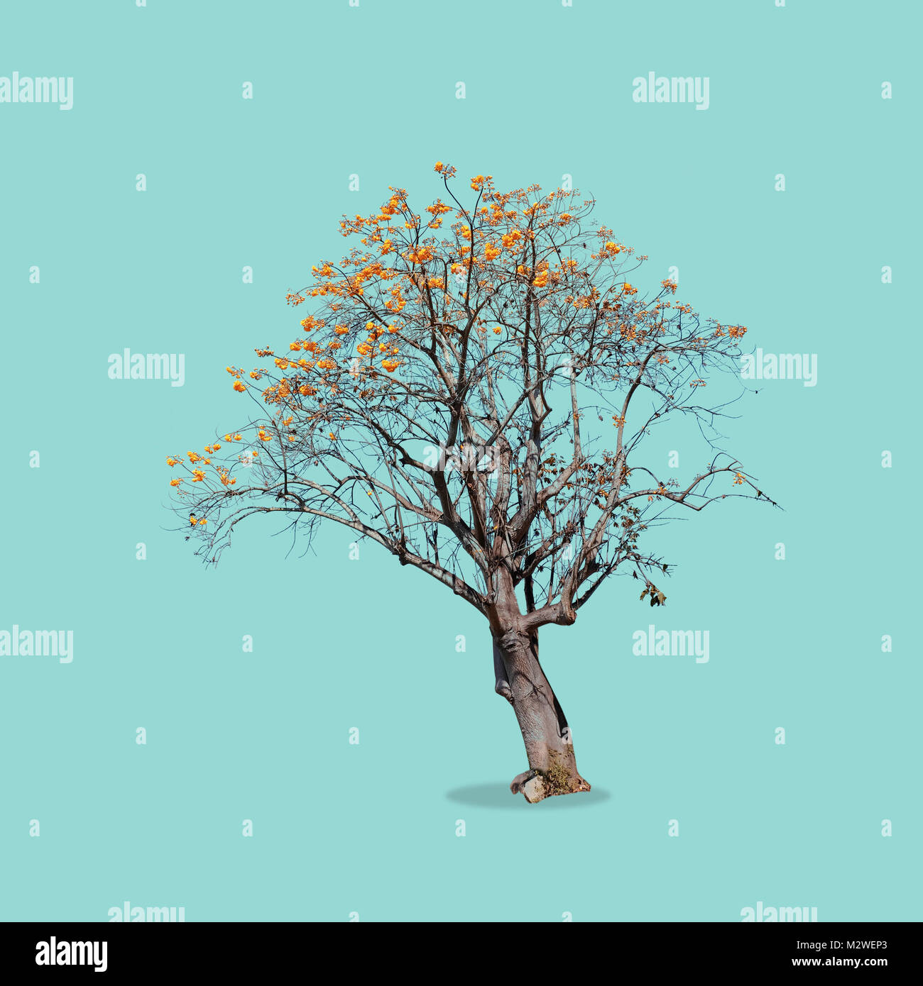 Big tree with a yellow flower on isolate stock photo 173893387 alamy big tree with a yellow flower on isolate mightylinksfo
