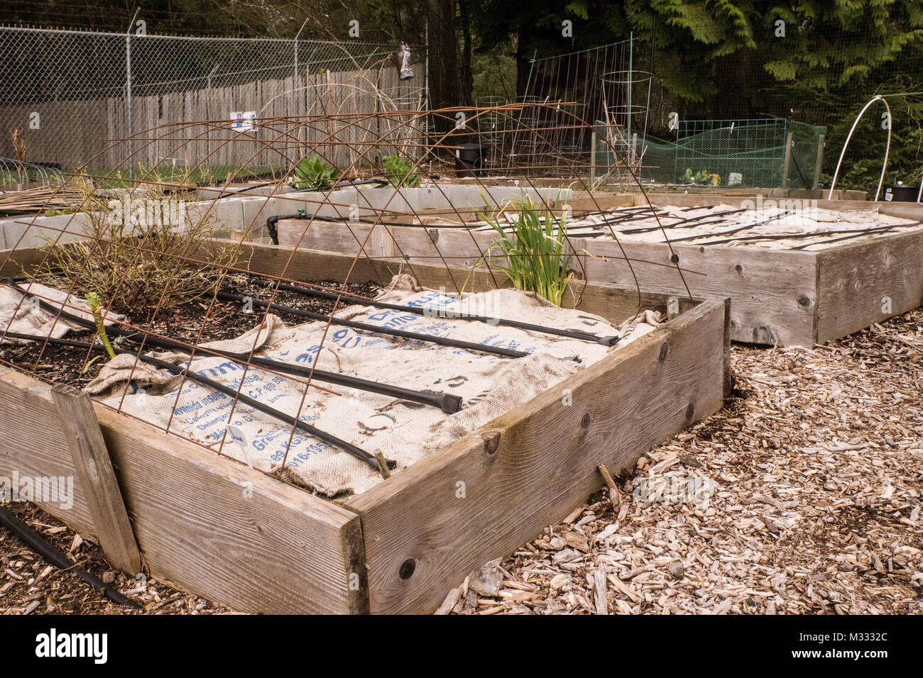Raised bed vegetable gardens covered by burlap to prevent the rain ...