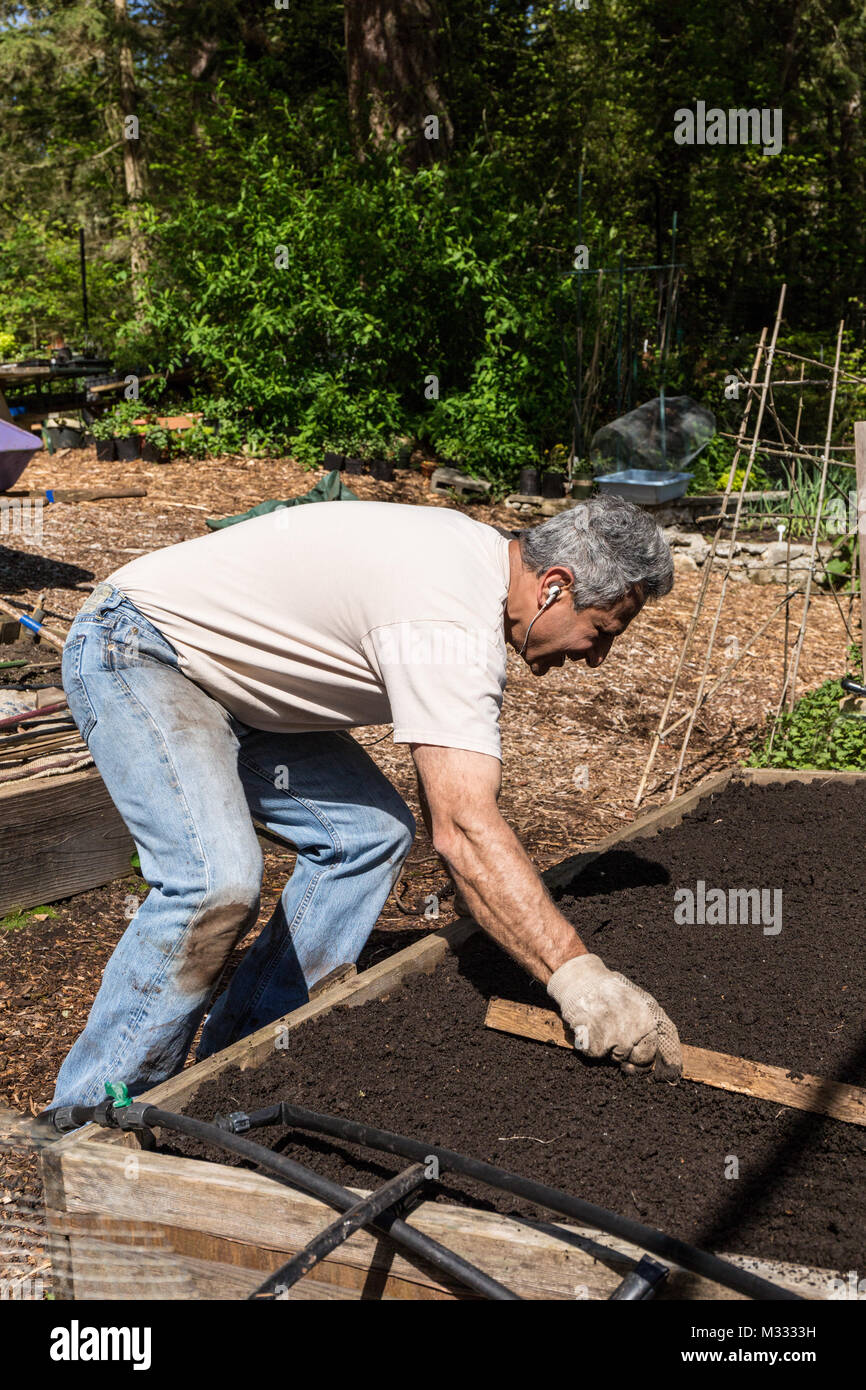 Man Smoothing The Surface Of A Raised Bed Garden That He Is Preparing For  Planting In