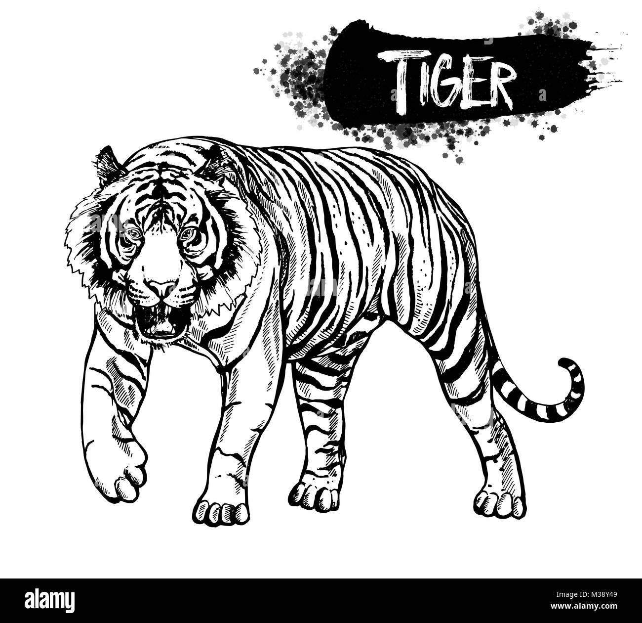 hand drawn sketch style tiger vector illustration isolated on white