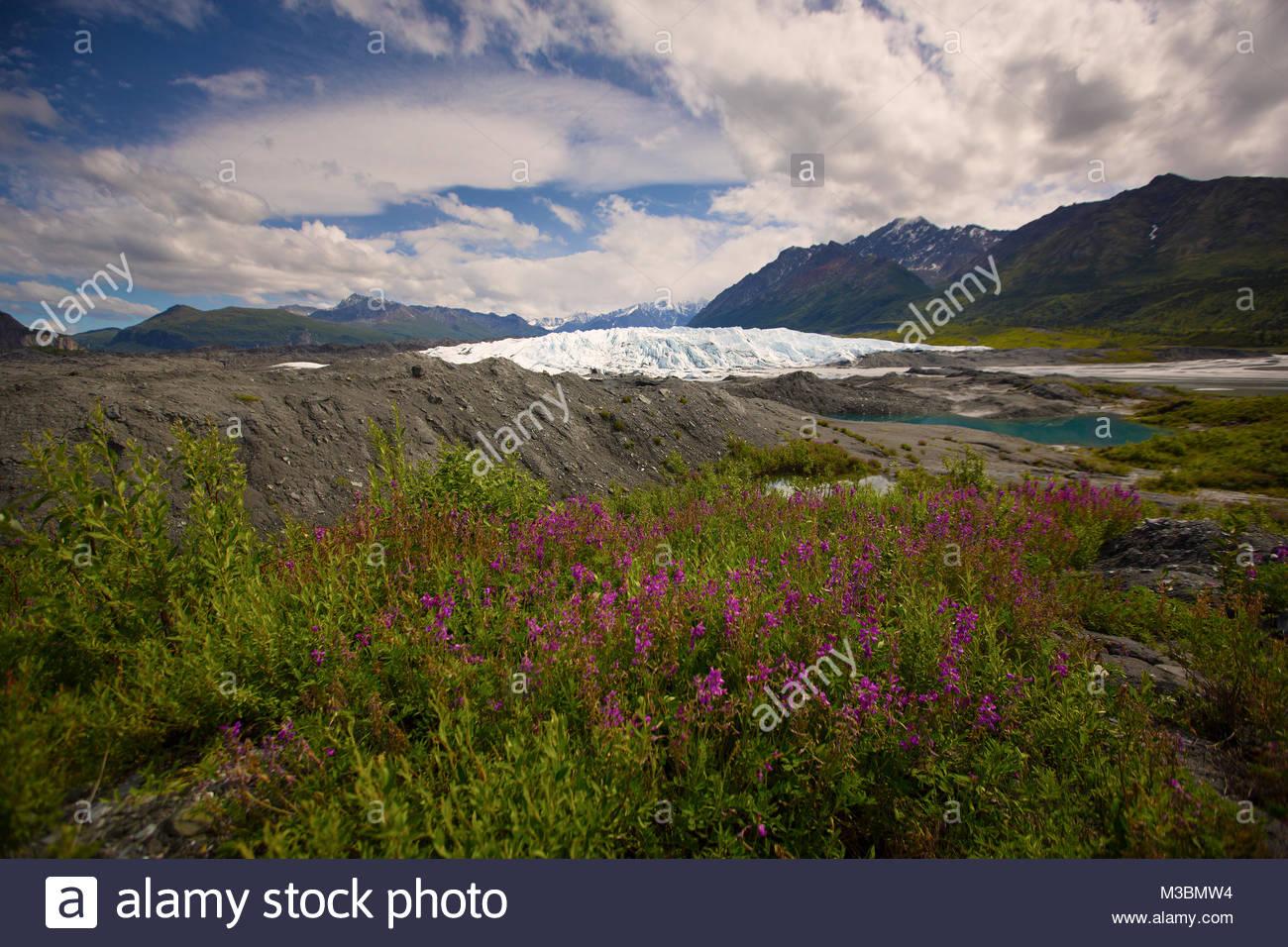Matanuska Glacier Summer Stock Photos Amp Matanuska Glacier