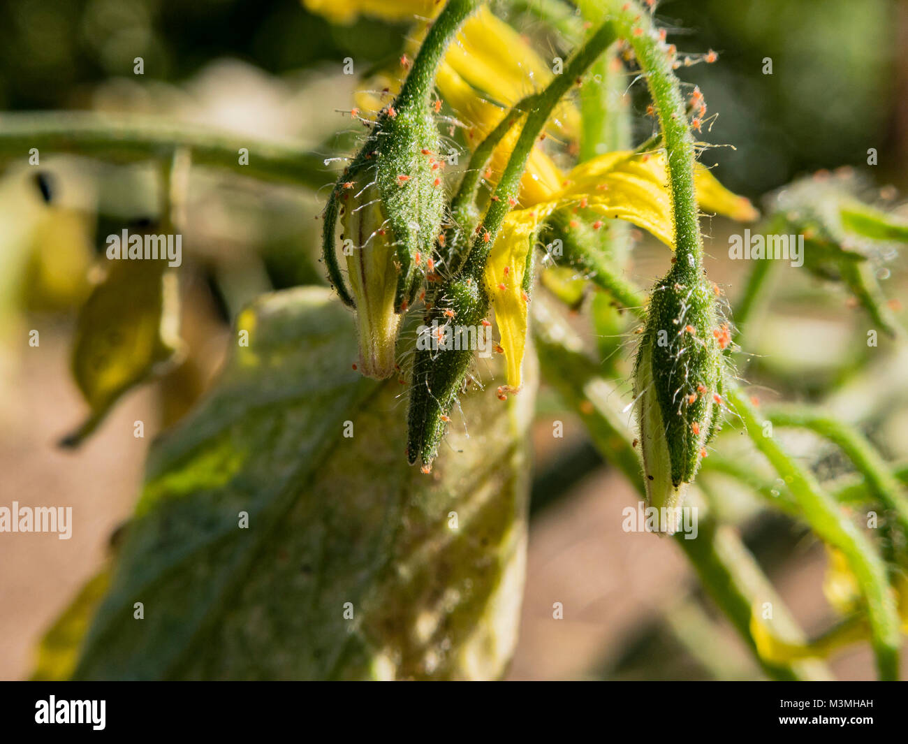 how to kill pests on plants