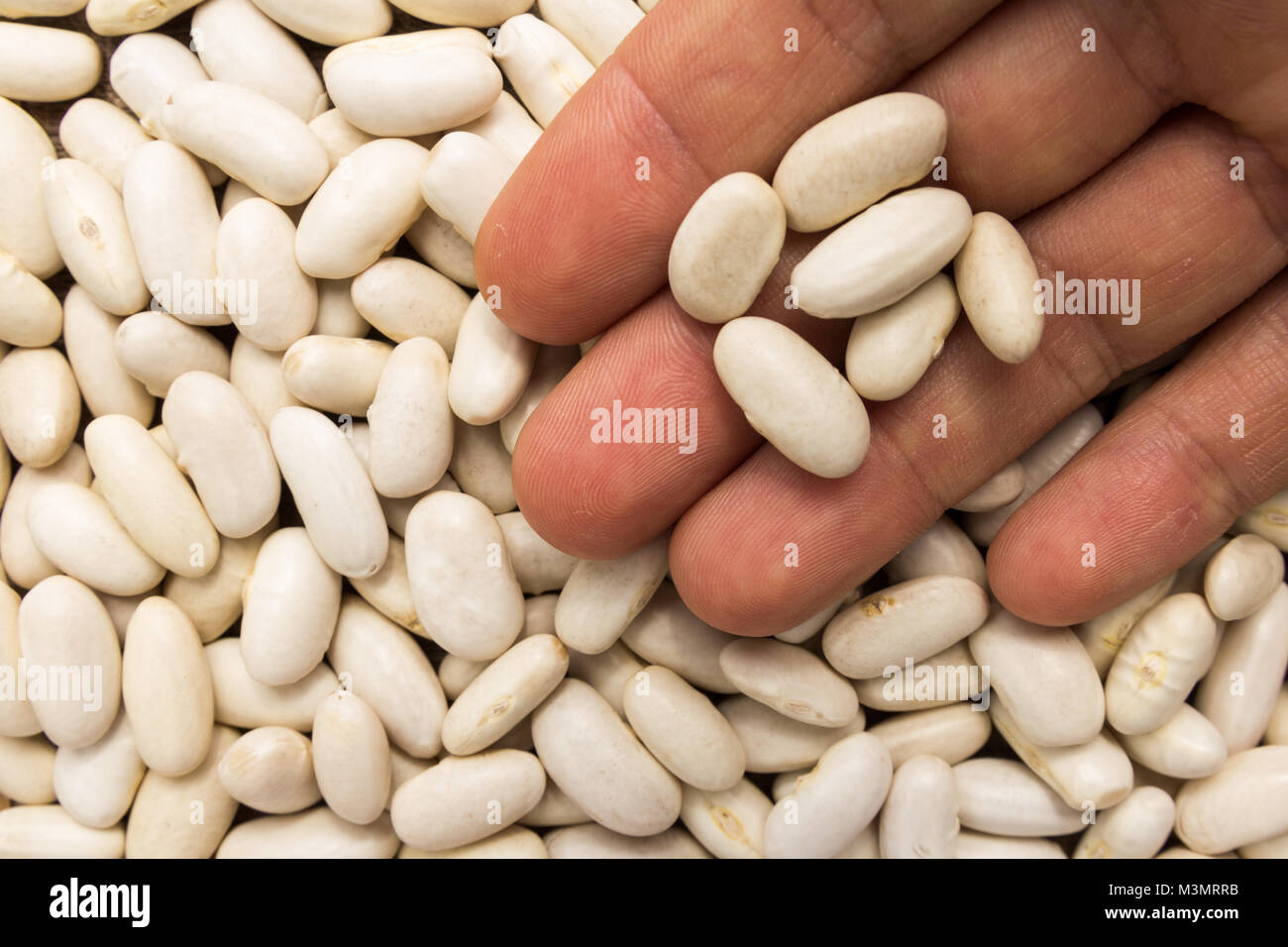 how to cook haricot beans