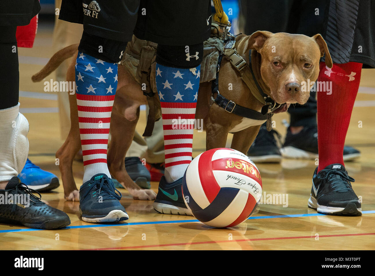 Wounded Service Dog Awards