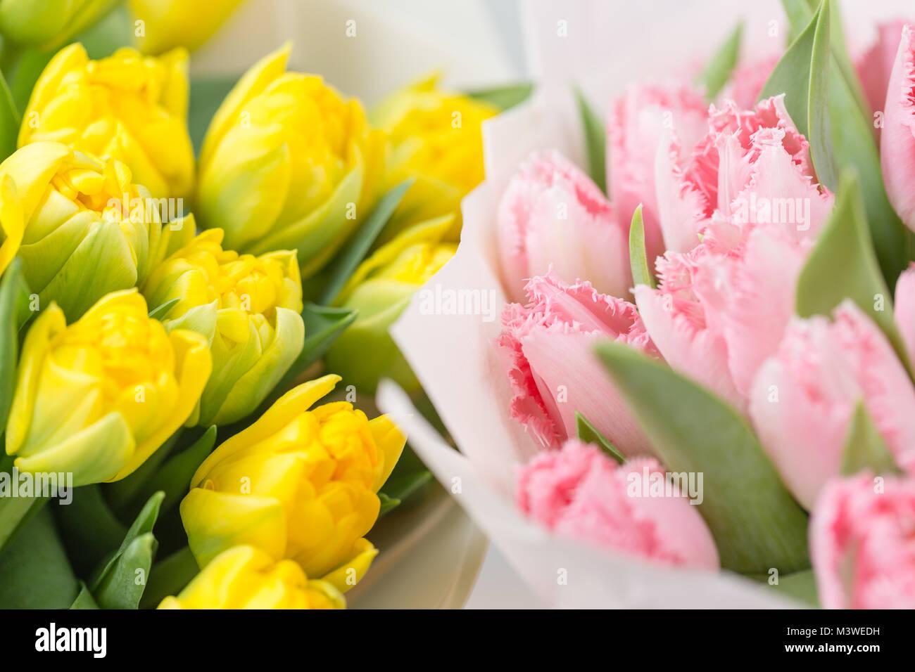 Tuips Closeup Flower Shop Concept Mixed Color Fresh Spring