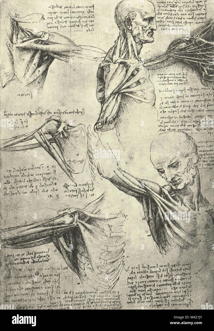 Anatomical drawing, by Leonardo Da Vinci, Man\'s neck and shoulders ...