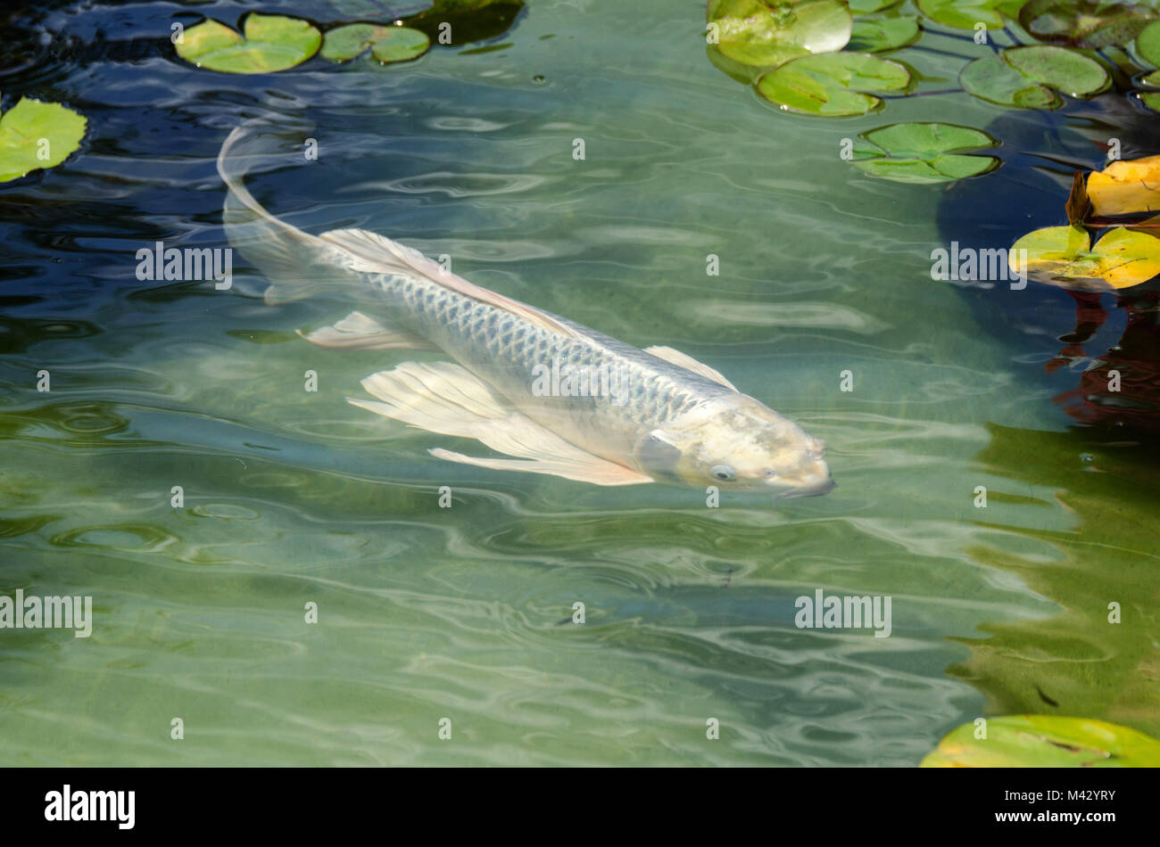 Pool Getty Stock Photos Pool Getty Stock Images Alamy