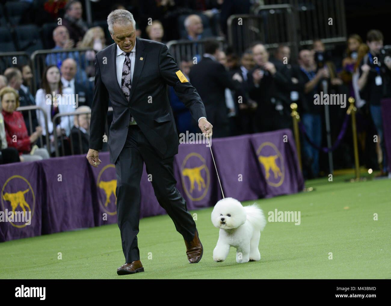 Kennel Club Dog Shows Scotland