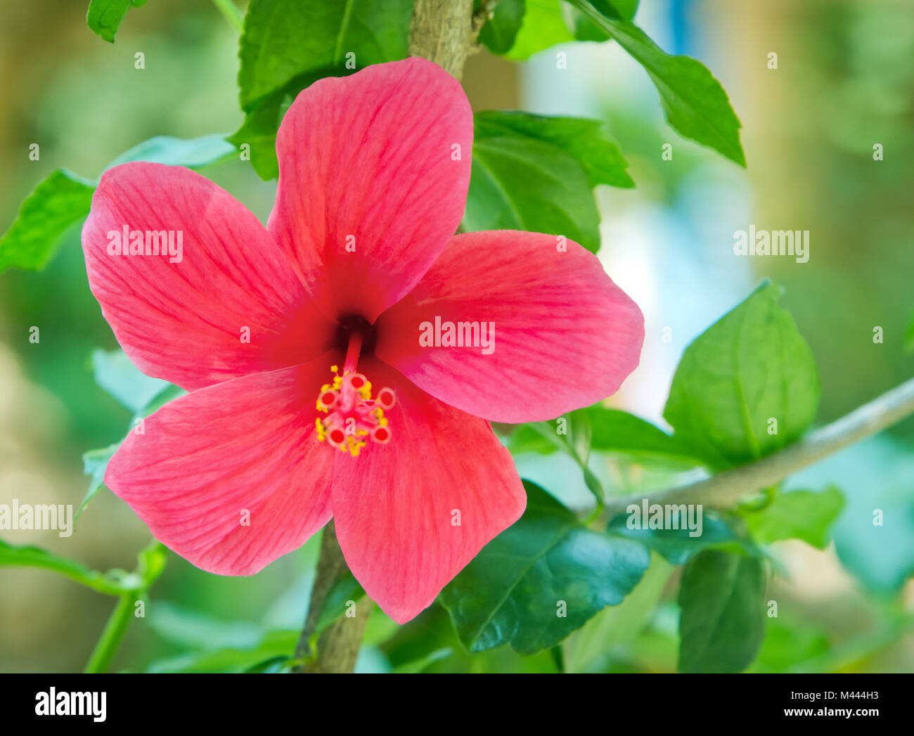 Different parts of hibiscus flower gallery flower wallpaper hd hibiscus flower with labelled parts images flower wallpaper hd different parts of hibiscus flower images flower izmirmasajfo Choice Image