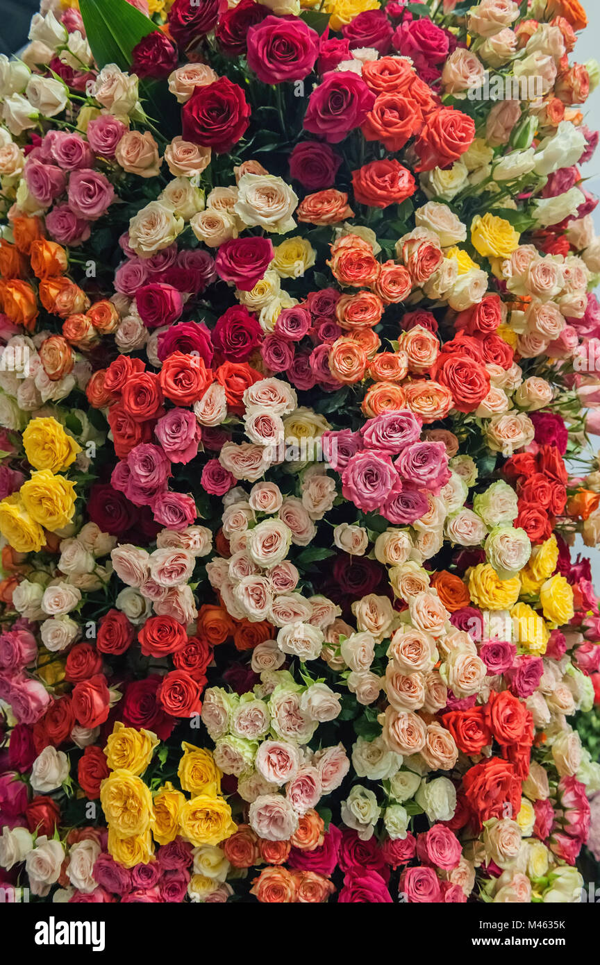 Background Wall Of Yellow White Red And Pink Rose Flowers The Stock