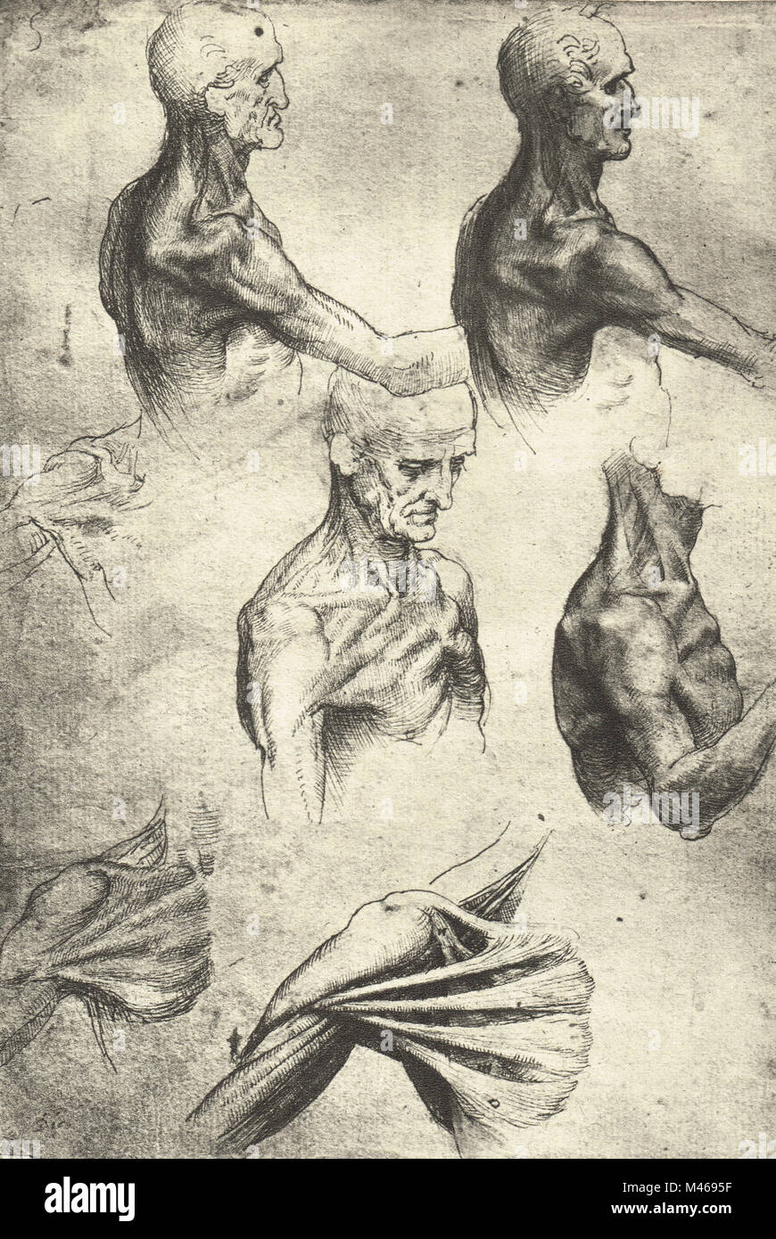 Anatomical drawing, studies of the head and shoulders of a man ...