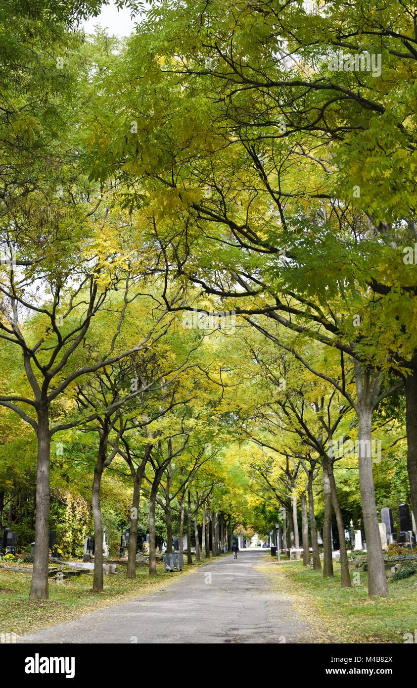 alley with autumnally colored locust trees Stock Photo: 174810130 ...