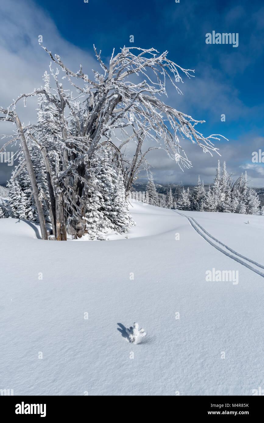 ski track at anthony lakes mountain resort in northeast oregon stock