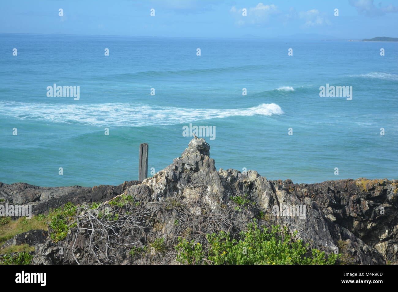 7f4d0eabaf1 Lizard sunbaking on the rocks looking over Pacific Ocean