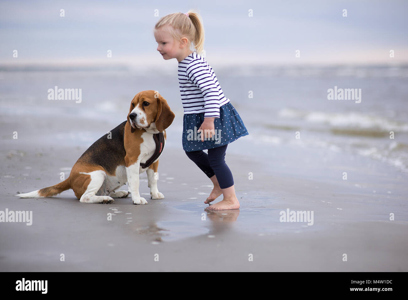 Good Sea Beagle Adorable Dog - girl-and-cute-dog-beagle-by-the-sea-M4W1DC  Photograph_318795  .jpg