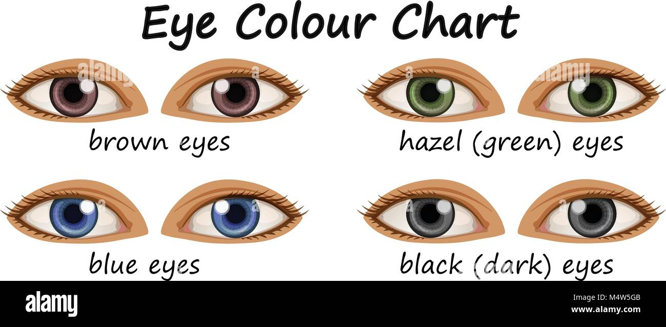 Human Eyes With Different Colors Illustration Stock Vector Art