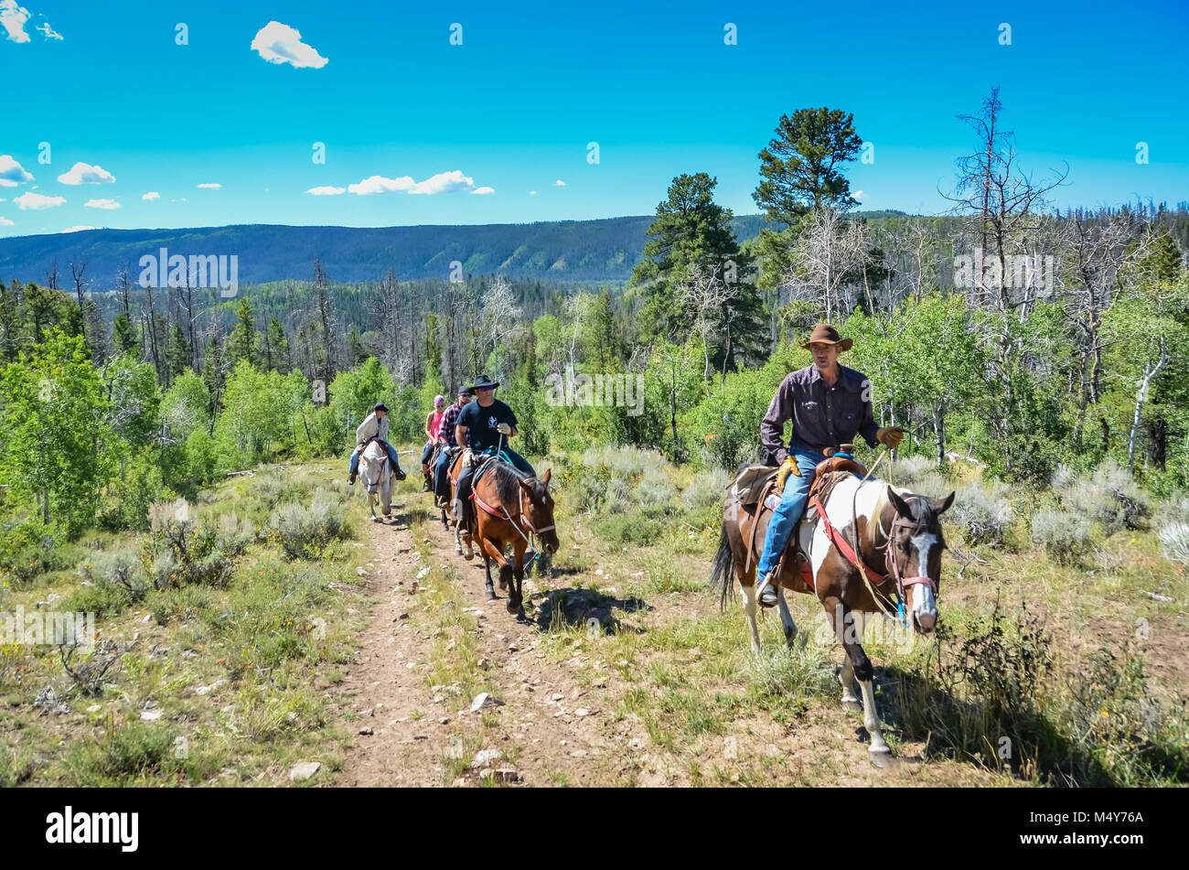 Guided horseback riding tour on mountain trail in Medicine