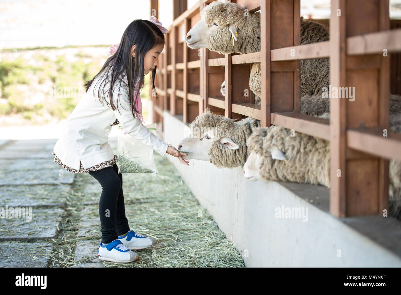 sheep ranch single christian girls Sheep terminology sheep and lambs  ranch a ranch is a farm consisting of a large tract of land along with facilities needed to raise livestock abattoir an.