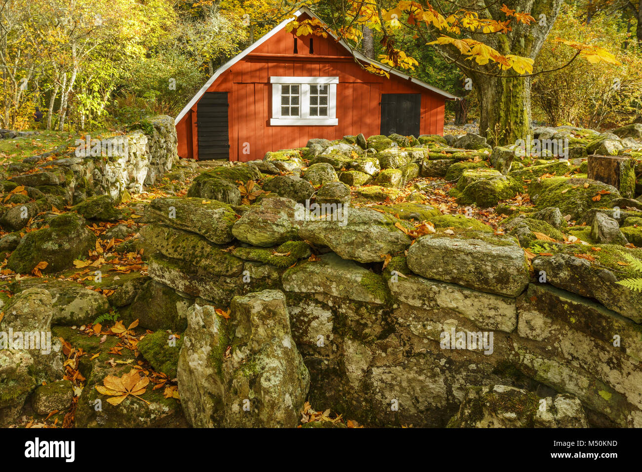 Autumn in the garden with a garden shed Stock Photo: 175192457 - Alamy