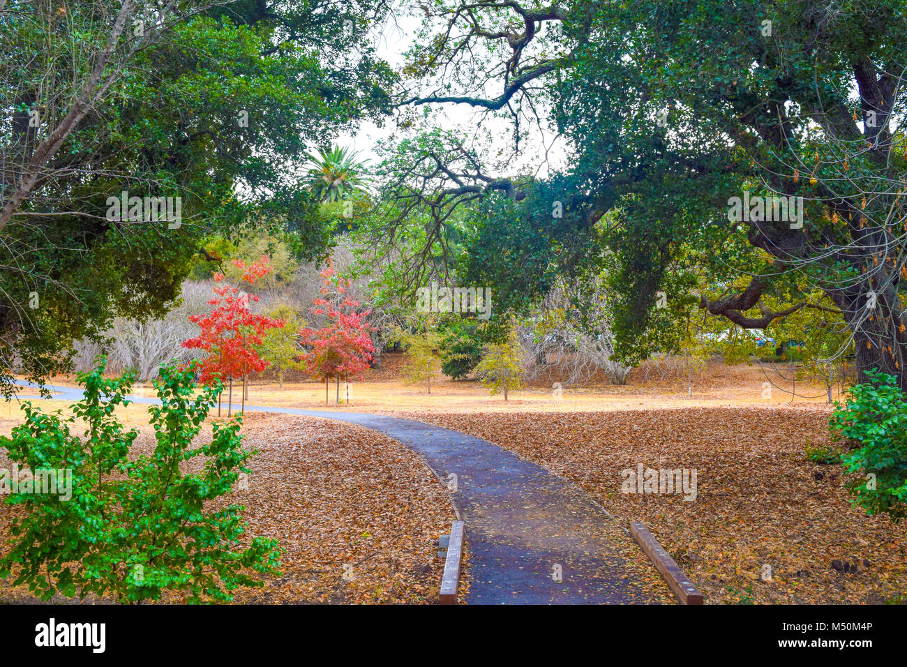 Beautiful path through a park, green and red colored trees, leafs ...