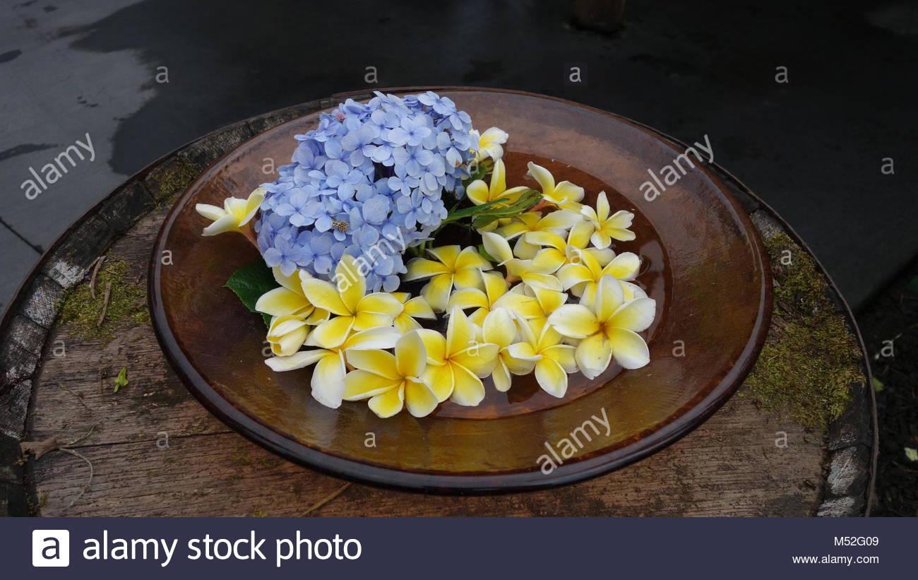 Anthuriums Plants For Sale Big Island