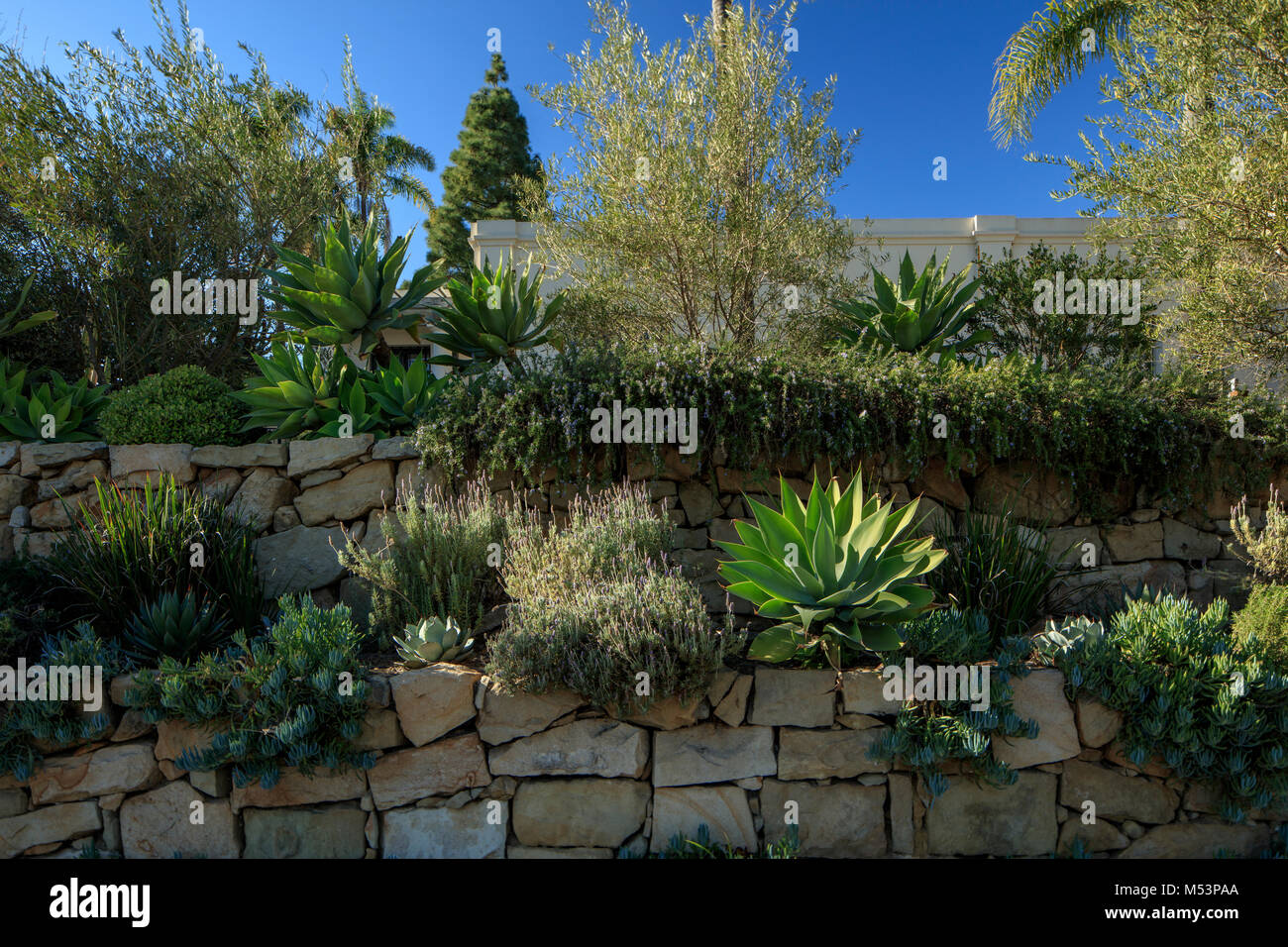 Double Layered Garden Featuring Succulents And Other Common Variety Of  Plants Found In A Southern Californian Home