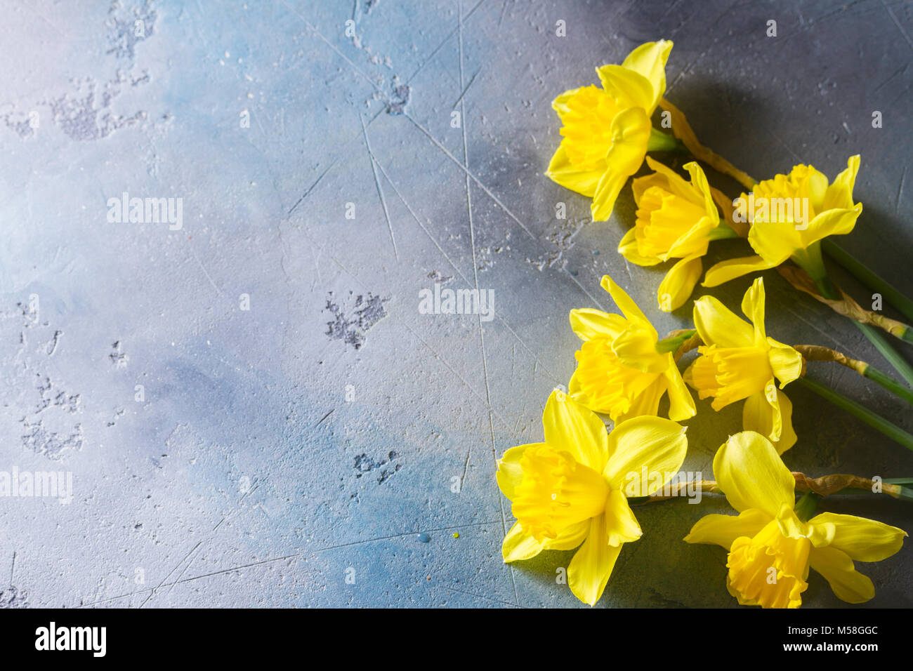 Easter fresh yellow flowers border on gray background with copy easter fresh yellow flowers border on gray background with copy space mightylinksfo